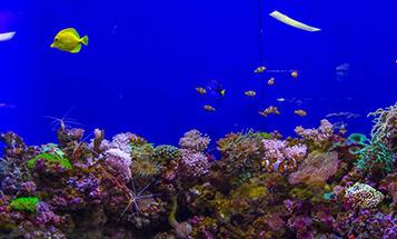 aquarium-in-dubai-mall